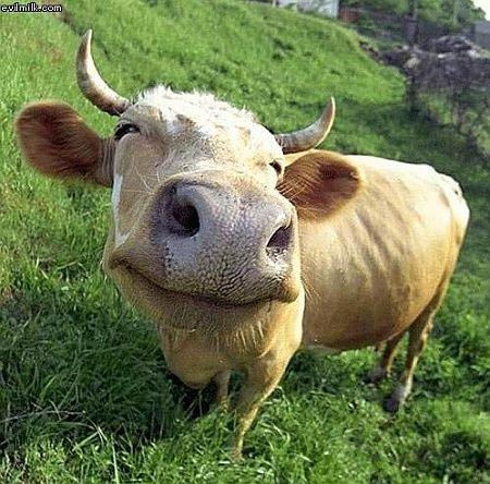 """""""Eat me!"""" zeiden de koeien in koor"""