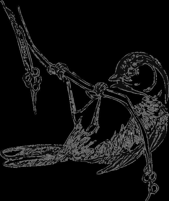bird-30843_1280